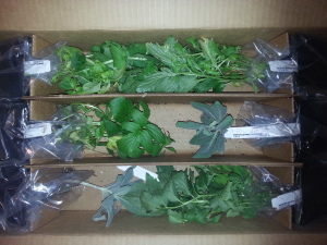 Box of herbs